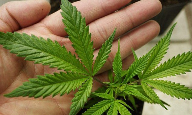 Feds Admit Marijuana Kills Brain Tumors, But You Still Can't Have It
