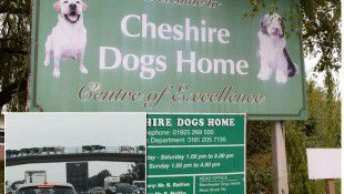 cheshire-dogs-home-main