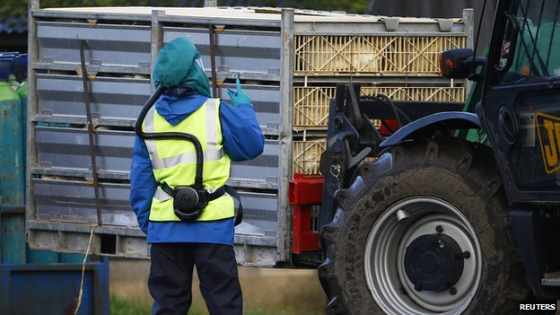 Health expert warns there 'will probably be human cases' of bird flu