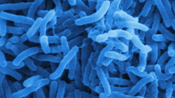 GMO Cholera Bacteria to Be Released in Australia, Canada, U.S.