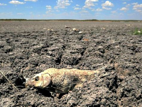 Drought Dead-Carp-Dry-Riverbed-AP