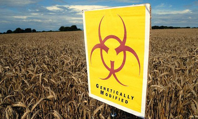 EU set to allow controversial GM crops to be grown in Britain