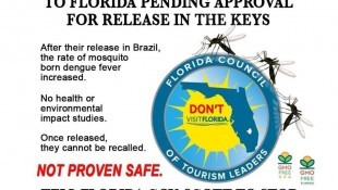 Millions of GMO mosquitoes may be released in the Florida Keys