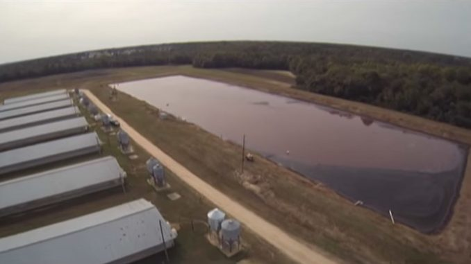 Drones Expose Smithfield Foods Factory Farms