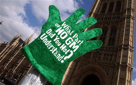 The Government's Drive to Force GMOs into Britain Against the Will of the People Continues