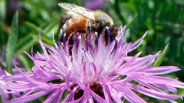 Ontario Admits Pesticides Are Killing Bees - Here's What They're Doing About It