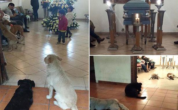 Stray Dogs Show Up At Funeral Of The Woman Who Used To Feed Them