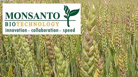 Monsanto Fined for 'Genetically Contaminating Wheat Supply'