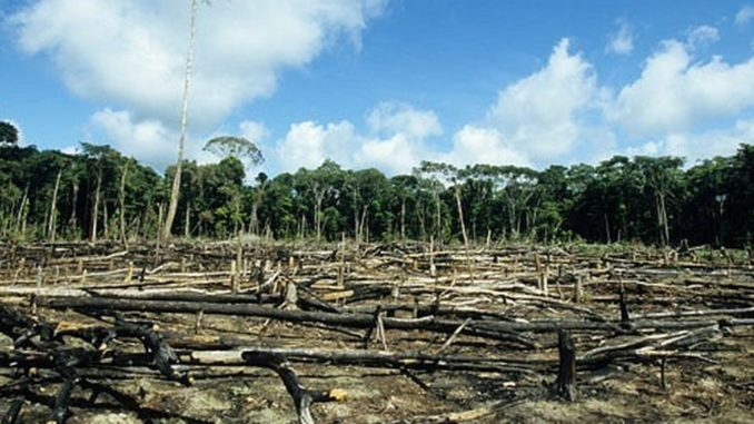 The division of earth's habitats into smaller and more isolated patches has left the planet with no real wild forests.
