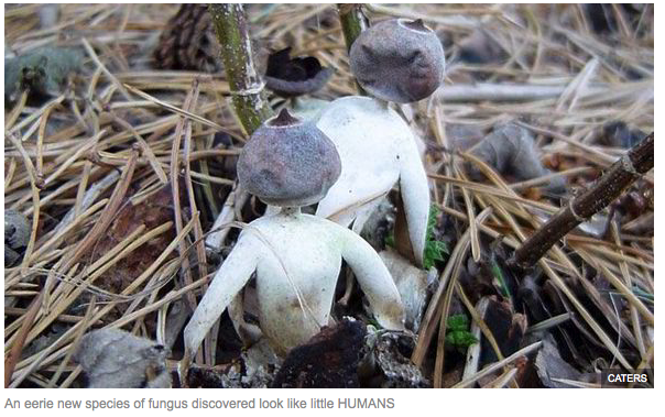 humanoid mushrooms