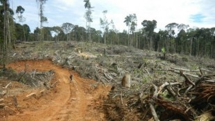 CEO Of London-Listed Company Linked To Illegal Clearing Of Amazon Rainforest