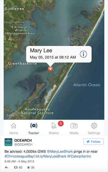 "Great White Shark ""Mary Lee"" tracked"