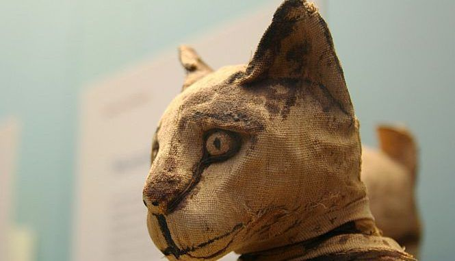 Egypt's animal mummy
