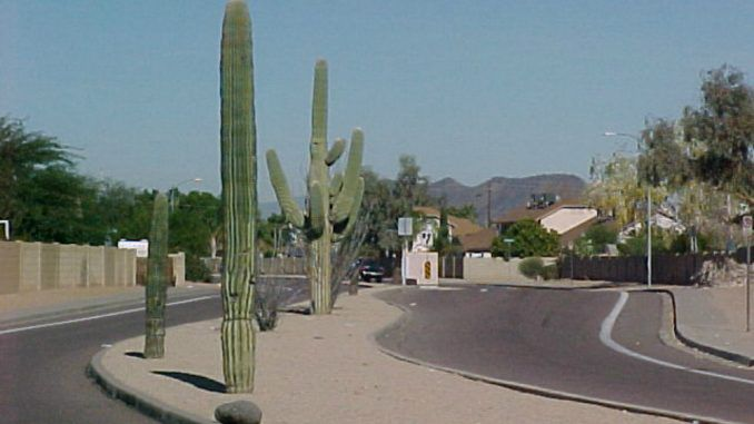Arizona Town Installs License Plate Scanning Cameras In Fake Cactuses