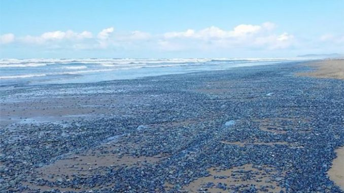 """The Ocean Off The California Coast Is """"Turning Into a Desert"""""""