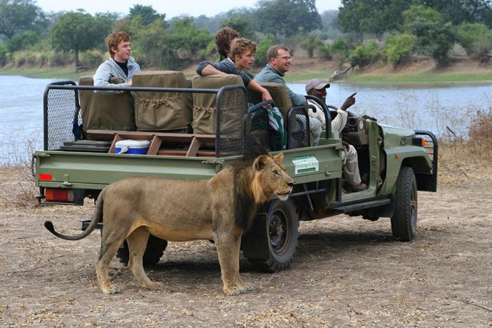Lion Mauls_Lion-with-FD-vehicle-med
