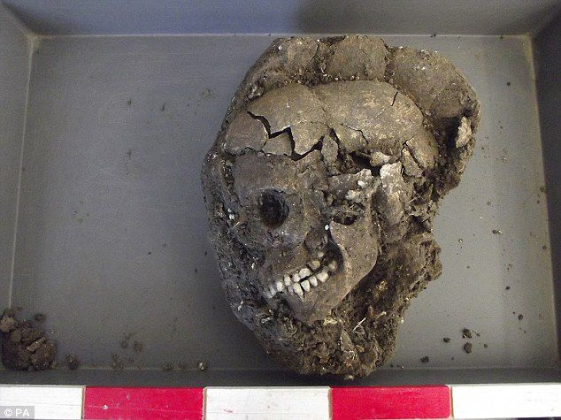 The Skull after excevation