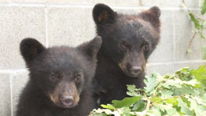 officer who refused to kill bear cubs