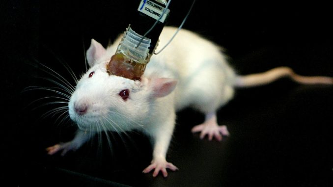 remote-controlled mice