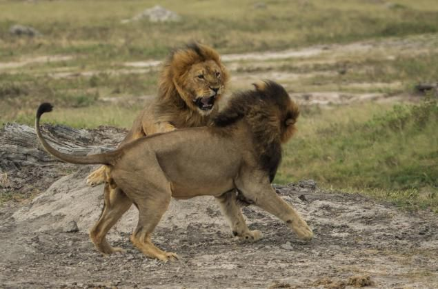 Jericho and Cecil
