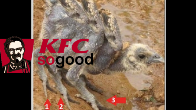 Image result for kfc chickens