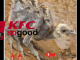 KFC Spider chickens