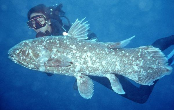 fish - coelacanth