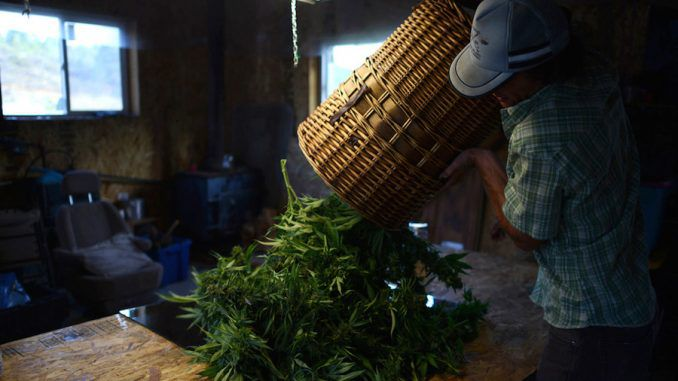 $10,000 worth of marijuana has fallen out of the sky landing near a family's home in the U.S.