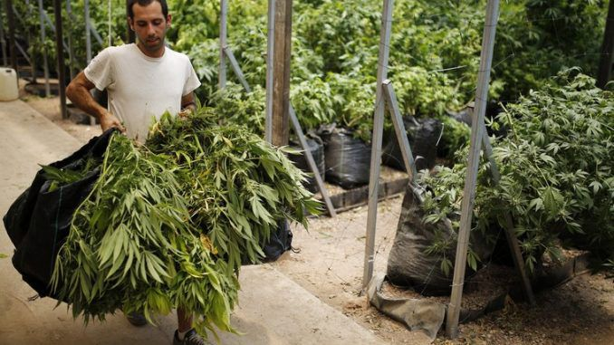Is Iran about to legalise cannabis?