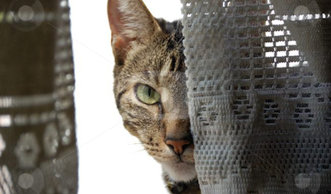 A new study says that cats actually want to kill their owners