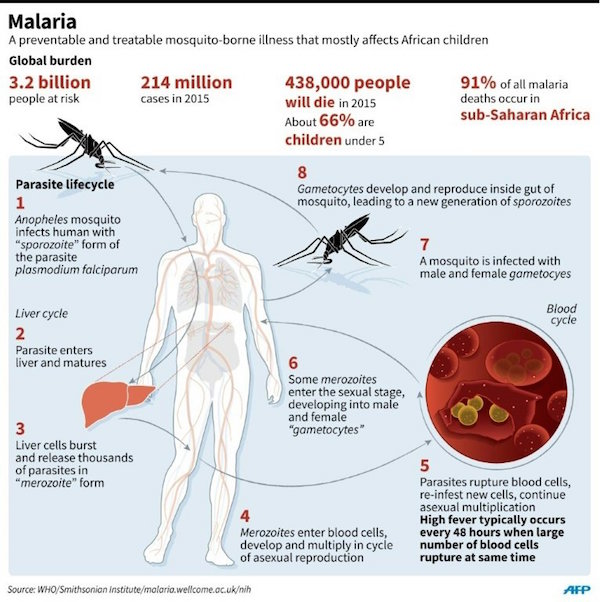 The Genetically Modified Mosquito That Could Fight Malaria