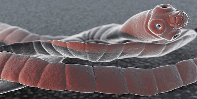 CDC say that tapeworms are capable of transmitting cancer to humans