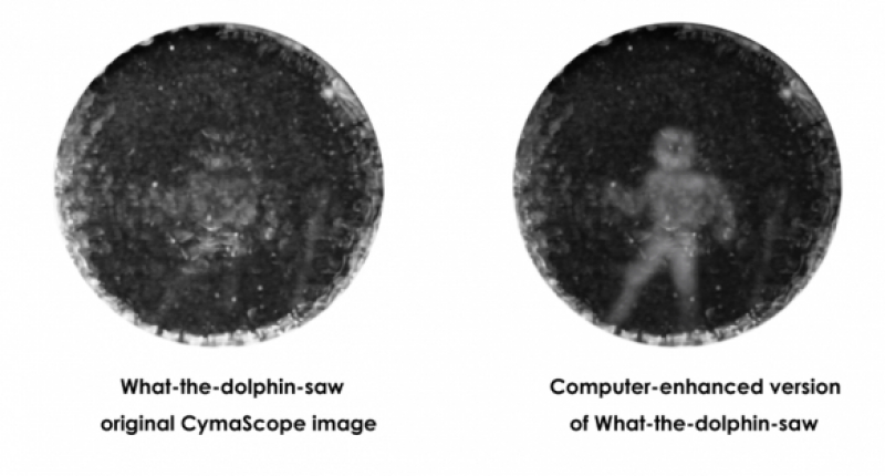 CymaScope image shows how a dolphin saw a submerged man, with a computer-enhanced image at right