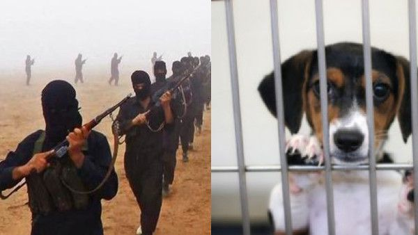 ISIS issues fatwa to kill all American puppies and dogs