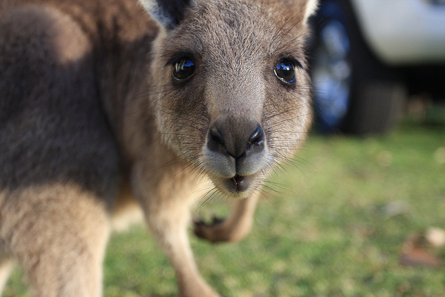 Australian teen planned to load kangaroo with explosives, foiled ISIS plot reveals