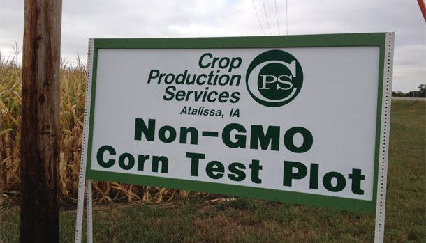US farmers drop GMO crops in large numbers