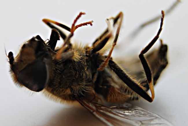 EPA admit they knew that bees were dying 20 years ago due to pesticide poisoning