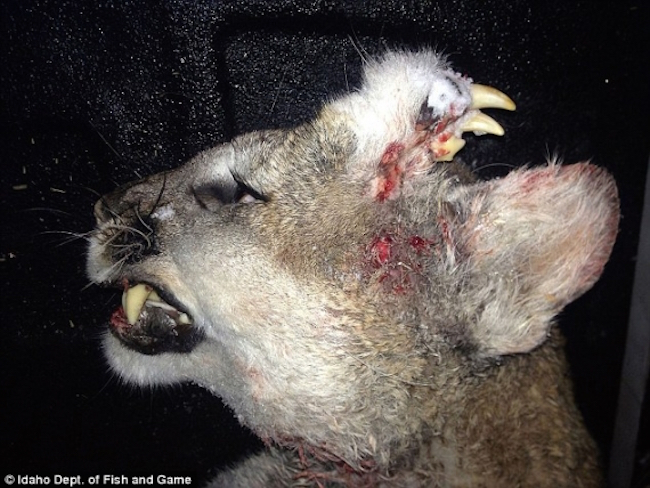 Fukushima radiation is causing mutations in animals in the USA