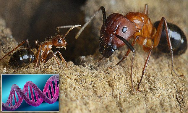 Scientists develop drug to reprogram brains in ants