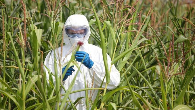 Scientists claim that Glyphosate is responsible for chronic disease amongst many Americans