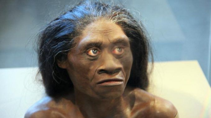 Study Claims Indonesian 'Hobbits' Were Not Human