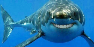 Humans Could Soon Regrow Teeth Like Sharks Scientists Say