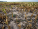 Scientists warn public to expect food shortages worldwide