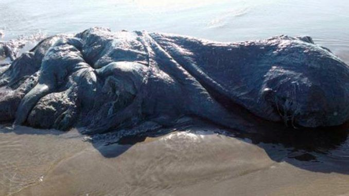Mysterious 13ft sea monster washes ashore in Mexico