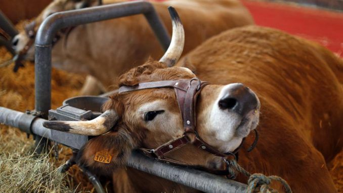 France confirms first case of mad cow disease in over 5 years