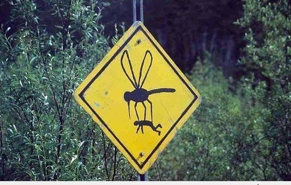 Does the London Underground house a subspecies of mosquito?