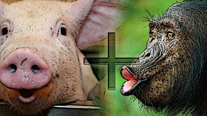 An american hybridization expert claims the human race may have evolved from a chimpanzee and pig mating