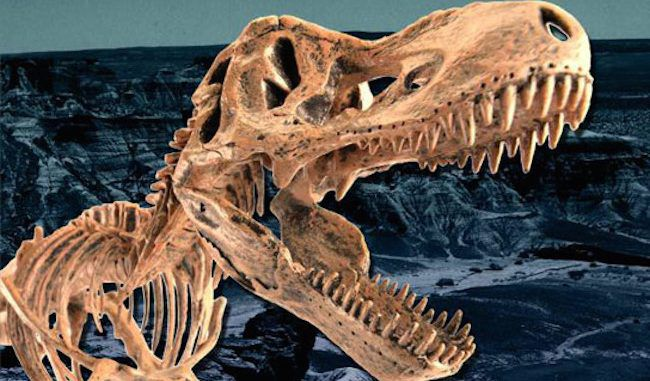 Scientists discover dinosaur fossil proving evolution