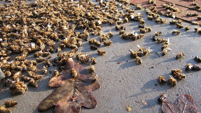 France ban all pesticides amid worldwide bee death epidemic