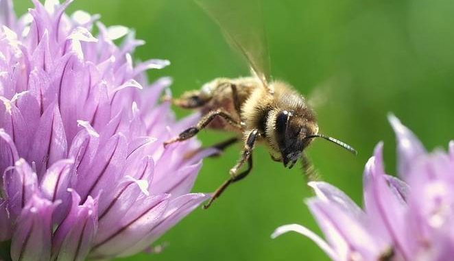 Up To 57 Different Pesticides Are Poisoning Honeybees In Europe